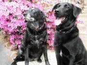 Missy & Schooner